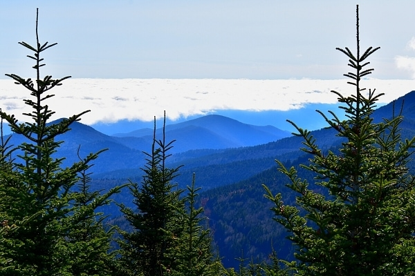 Blue mountains lie below a blanket of white clouds, as seen from the summit of Mt Mitchell