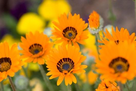 mito flowers 4