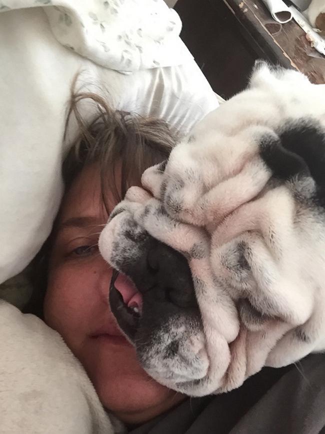 29-cachorros-folgados-que-nao-estao-nem-ai-pra-privacidade-dos-outros21