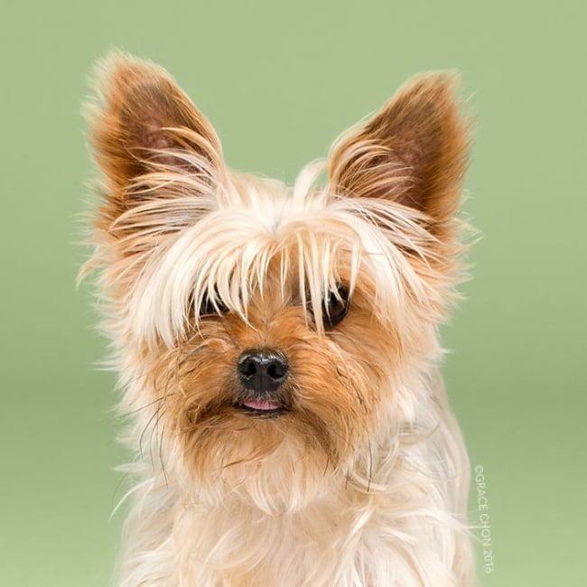 cabeleireiros-e-o-dom-de-deixar-um-cachorro-irreconhecivel13