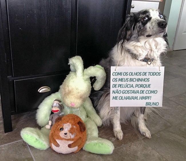 19-motivos-para-entender-e-perdoar-seu-cachorro6