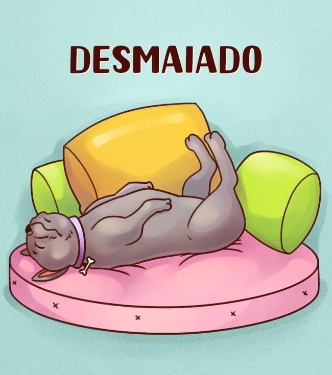 a-posicao-que-seu-cachorro-dorme-diz-tudo-sobre-a-personalidade-dele6
