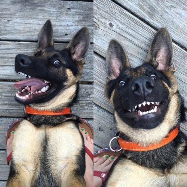 20-fotos-de-cachorros-completamente-felizes-com-a-situacao-em-que-estao10