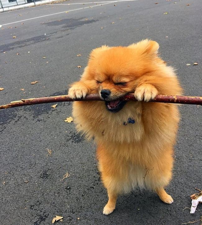 20-fotos-de-cachorros-completamente-felizes-com-a-situacao-em-que-estao18