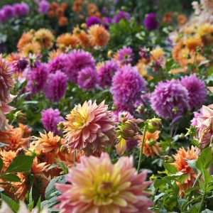A group of colorful flowers Description automatically generated with low confidence