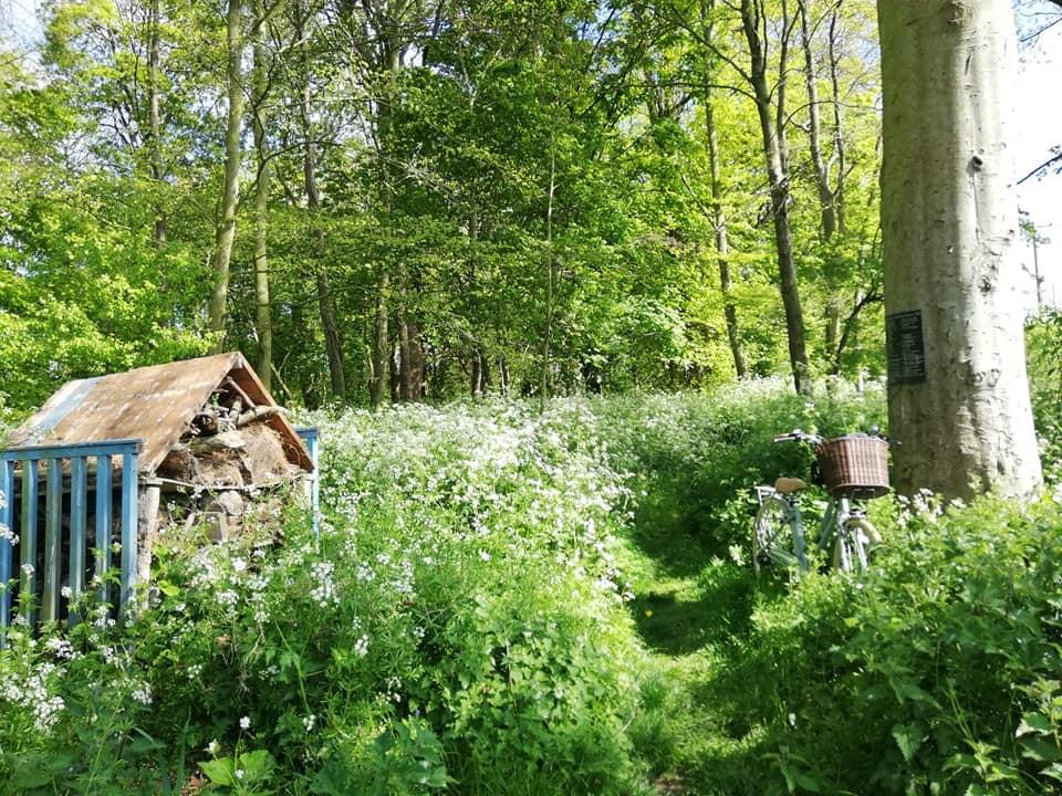 The Woods in Julianstown Village by Mog Downey