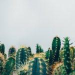 Un article un jour – Les séries d'un blog – Episode 4