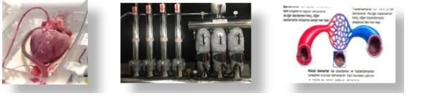 ısıtma sistemi