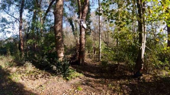 Bosrijk gebied aan Albertuswijk gemeente Muizen Foto Verschueren Eddy §Mechelen op zijn Best)
