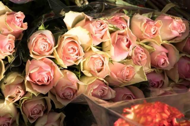 Bloemenhandel 'De Vliegende Hollander'schenkt 2000 bloemen aan Hof van Egmont