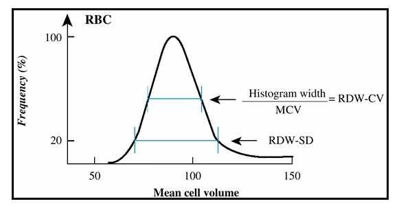 Red Blood Cell Distribution Width Cv And Sd Med Healthnet