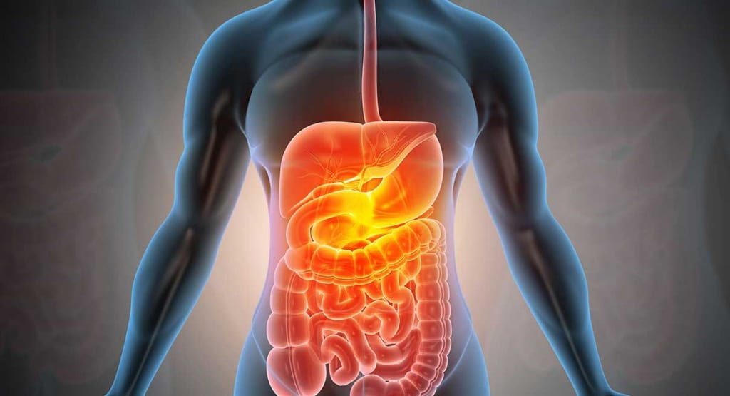 Know your digestive system, organs, & function - MedClique