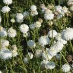 Remèdes naturels conseillés pour les mycoses des doigts de pied