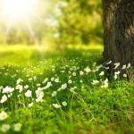 La vitamine D dans la médecine prophétique