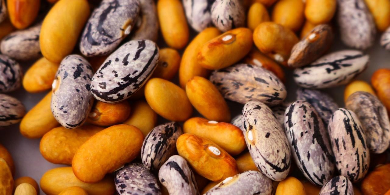 Remèdes pour la protéinurie