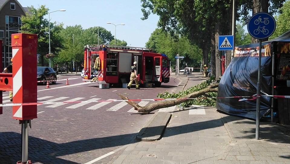De afgebroken tak op het Noorderveemarkt terrein in Hoorn (Foto: René Assendelft)