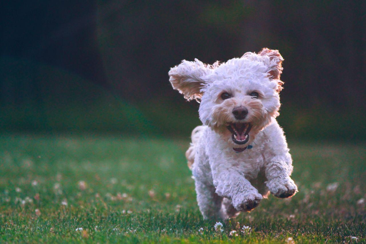 Let op! De hondenbelasting komt weer in de bus | Medemblik Actueel.