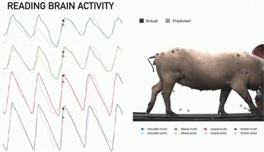 Elon Musk's Neuralink Shares More About Its Implantable Brain Stimulator 8