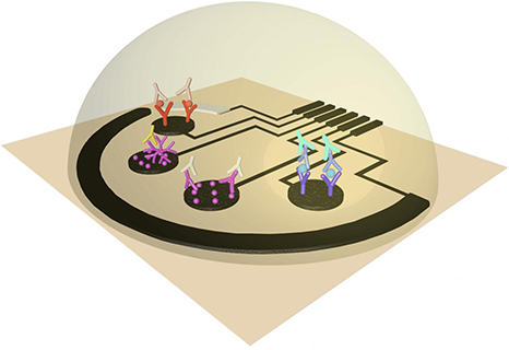 Sensor Rapidly Detects SARS-CoV-2, Antibodies, and Inflammatory Markers 4