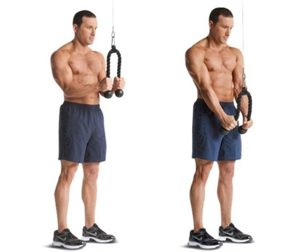 Image result for rope triceps cable pulldown