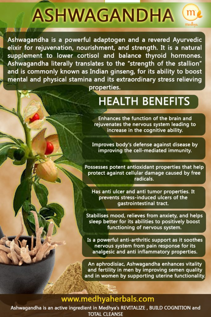 "Ashwagandha is a powerful adaptogen and a revered Ayurvedic elixir for rejuvenation, nourishment, and strength. It is a natural supplement to lower cortisol and balance thyroid hormones. Ashwagandha literally translates to the ""strength of the stallion"" and is commonly known as Indian ginseng, for its ability to boost mental and physical stamina and its extraordinary stress relieving properties."
