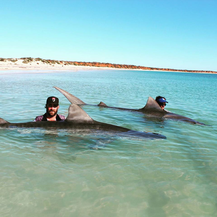 Two Daredevil Fishermen Catches Giant Tiger Sharks