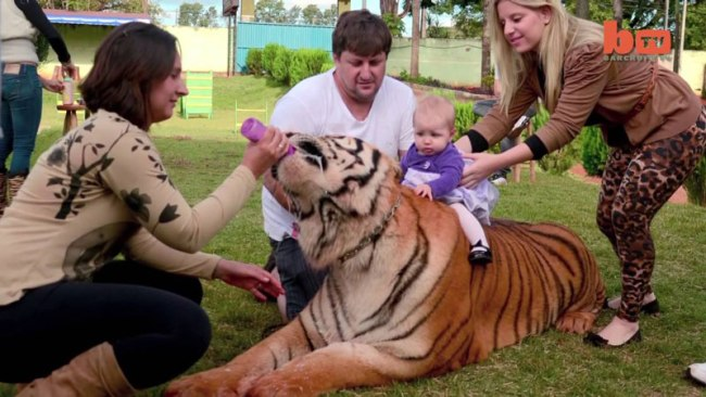 This Brazilian Family Who Share Their Home And Lives With Seven Pet Tigers