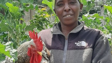 Photo of CHICKENING OUT OF POVERTY? JOLLY POULTRY ENRICHING RURAL LIVELIHOODS