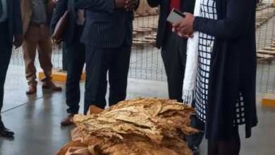 Photo of Zim tobacco farmers cry foul of current forex retention threshold
