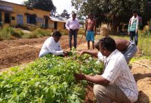 Photo of Kitchen gardens tackling malnutrition in rural Chhattisgarh
