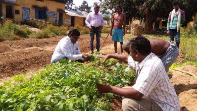 Photo of Kitchen gardens tackling malnutrition in rural Chhattisgarh