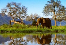 Photo of Zimbabwe: Partial relaxation of lockdown excites tourism sector