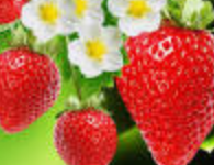 Photo of Benefits of strawberries