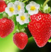 Photo of Benefits of strawberries