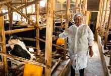 Photo of Zim's milk output down to 57.08mln litres in first 9 months