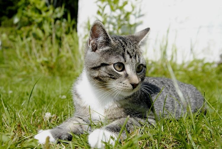 Les chatons mignons dans la hiérarchie de l'info