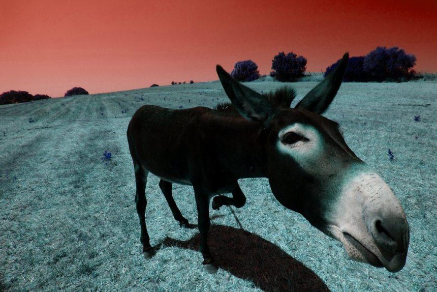 Les commentaires pas si bêtes - Crédit deadstar via Flickr.com