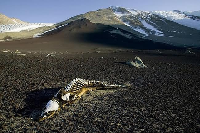 Dry-Valleys-Antarctica-3.jpg