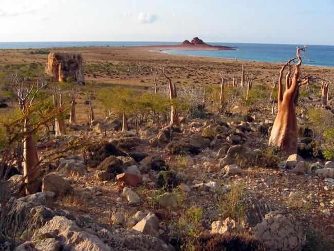 Socotra-Island-1.jpg