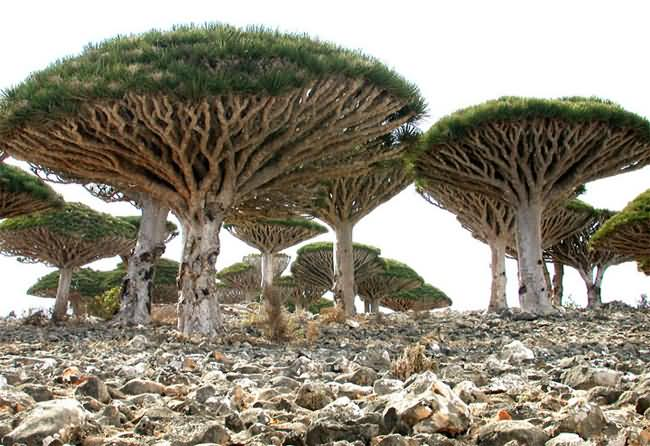 Socotra-Island-2.jpg