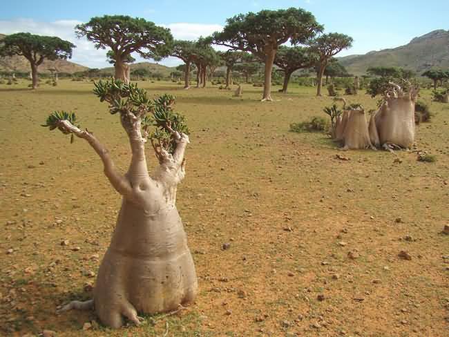 Socotra-Island-3.jpg