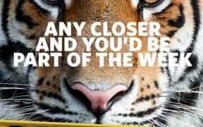 Big-Cat-Week