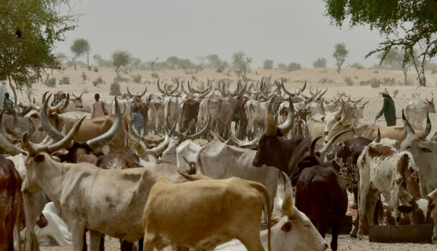Suspected herdsmen kill farmer in Ogun