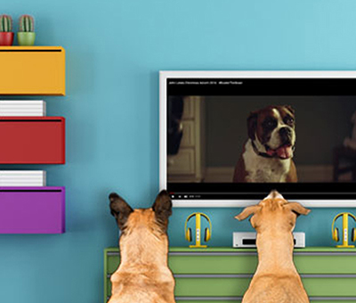 dogs watching another dog on tv - media link digital marketing agency