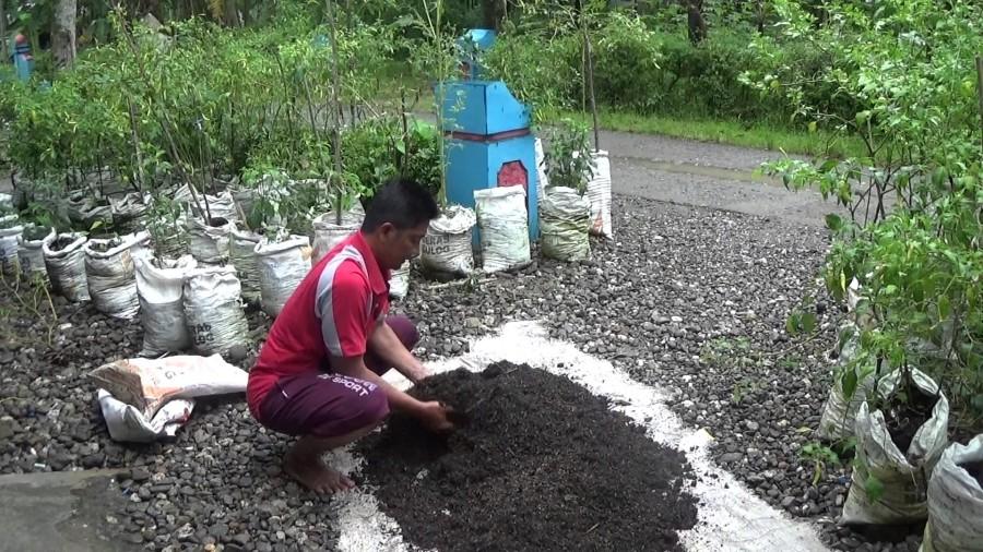 pemupukan tanaman organik