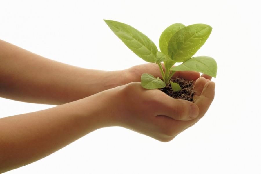 tanaman organik sehat