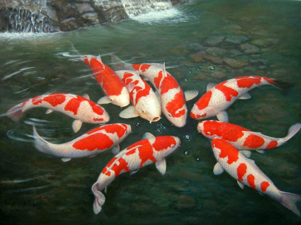 Unduh 2000 Wallpaper Bergerak Ikan Hias  Paling Baru