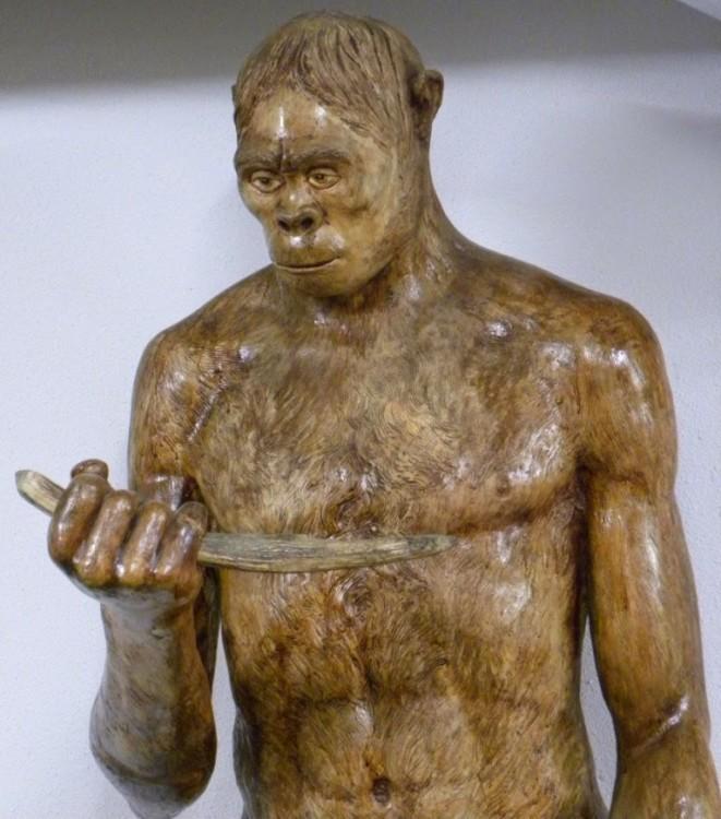 manusia purba jenis pitecanthropus soloensis