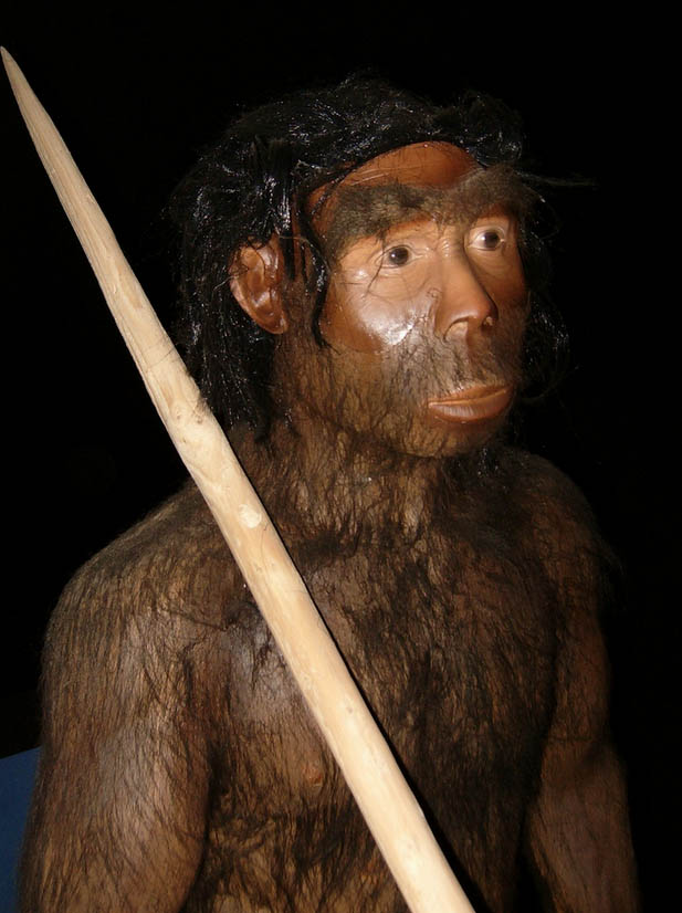 manusia purba jenis pitecanthropus erectus