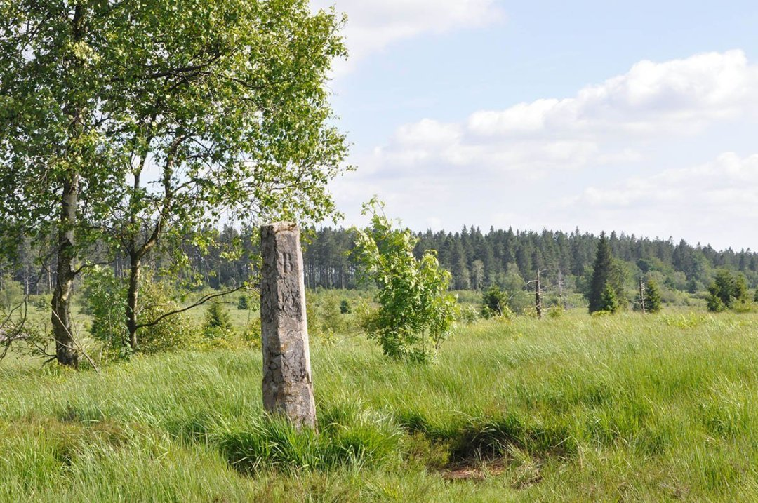 Portfolio-2019-Mediardenne-La borne dans les Hautes Fagnes